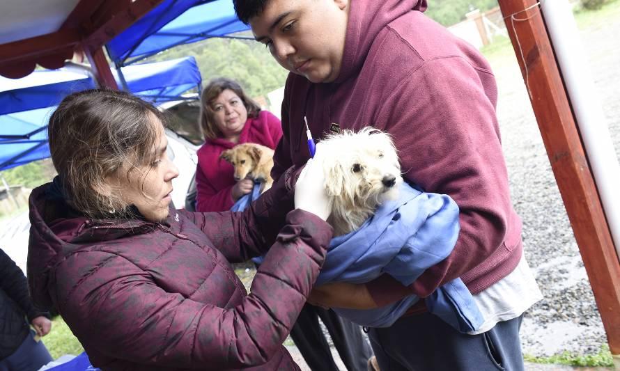 Operativo veterinario de la Gobernación de Valdivia registró 24 atenciones - Diario Futrono